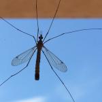 Čuvajte se komaraca u Grčkoj!