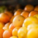 Opasan za ljude: Zabranjen uvoz voća tretiranog štetnim insekticidom