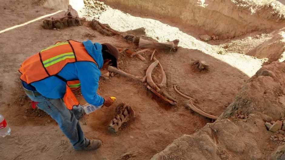 Tokom radova na izgradnji aerodroma u Meksiku pronađene kosti više od 60 mamuta