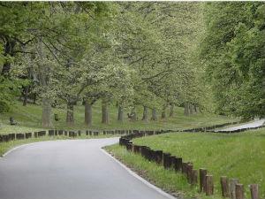Vučić: Naravno da sam protiv seče šume na Košutnjaku