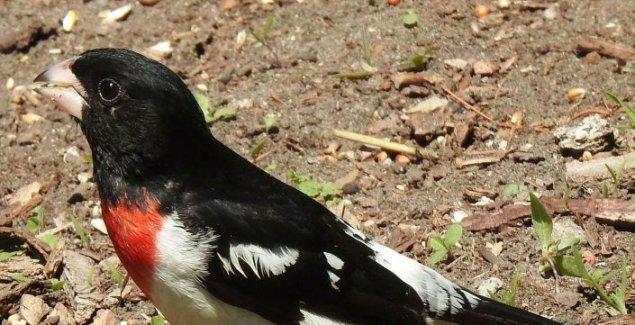 Nit je muško, niti žensko: Naučnici zapanjeni otkrićem kod jedne vrste ptica /foto/
